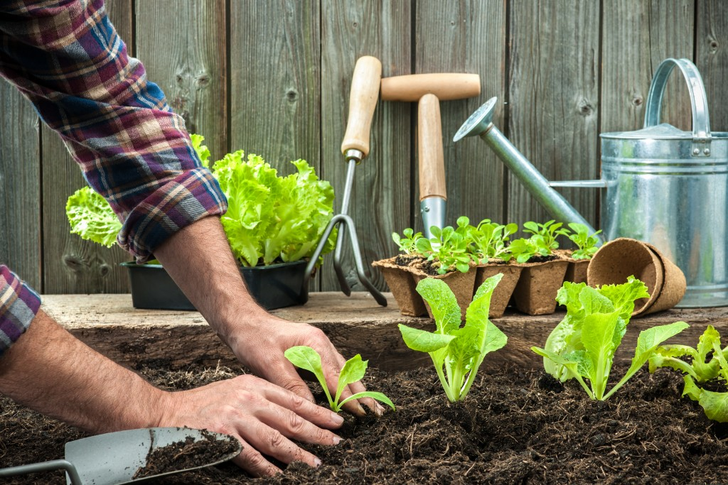 Man growing vegetables