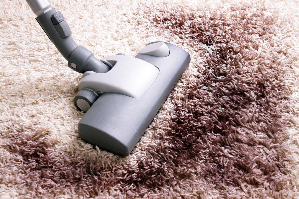 person cleaning the carpet