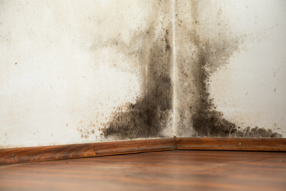 black mold in the corner of the house