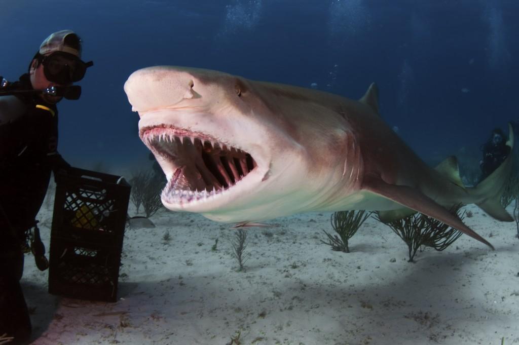 man posing next to a shark