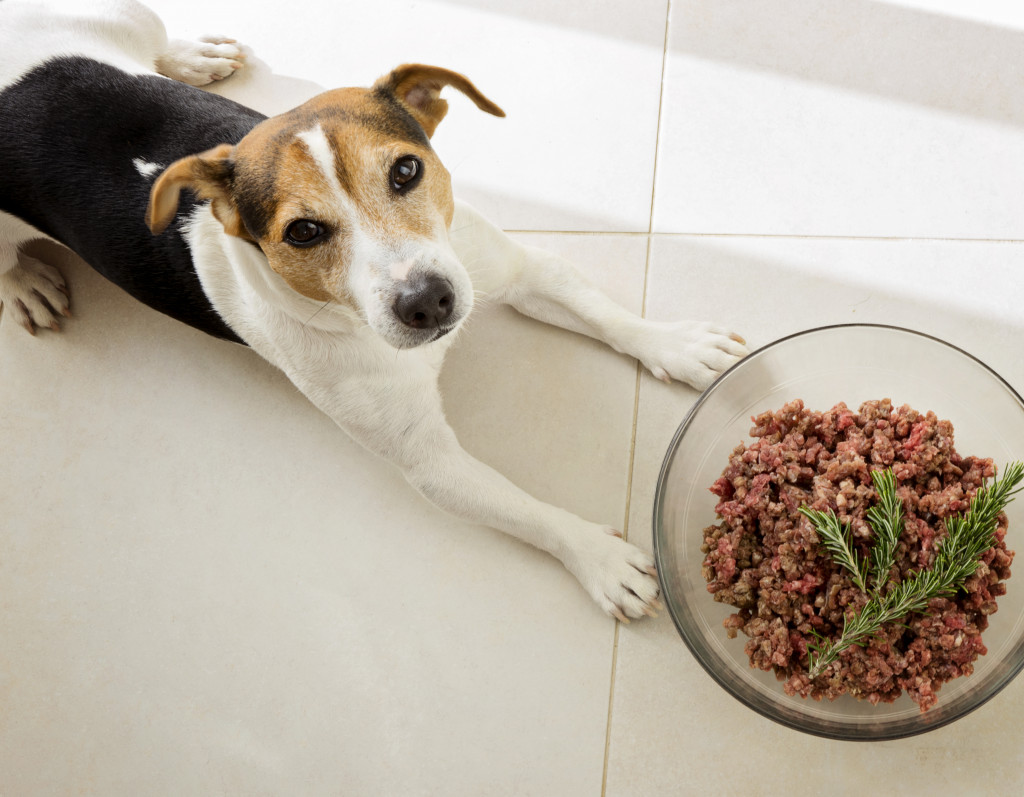 dog eating cooked food